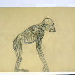 Otto Dix, Anatomischer Affe, sketchbook drawing, 1954